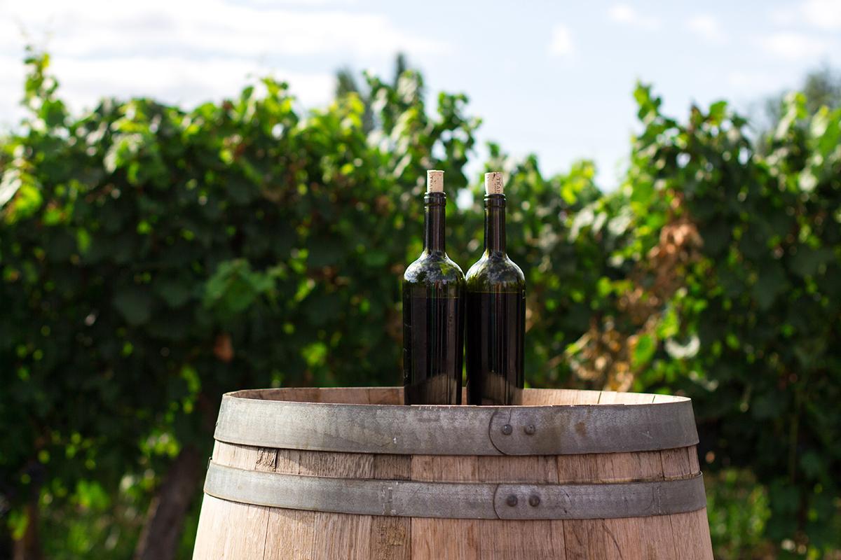 Органічні, біодинамічні та натуральні вина: що це таке та як їх розрізнити?